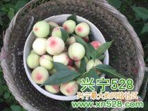 我们农村,乡下地方种的桃子。