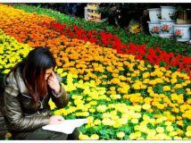 花市迷书人