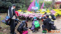 青岛中山公园菊展(2014.10.29)