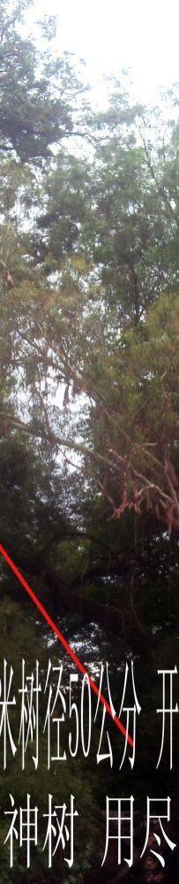 神光山上有神树 用尽慧眼猜不透