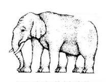 大象有几条腿