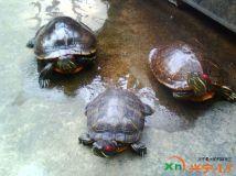 我家的小龟旦