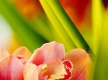 花市上的兰花