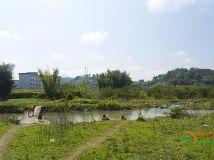 几张农村风景照片