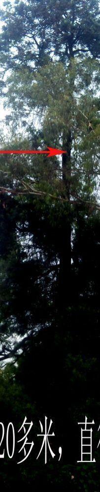 神山出神树